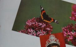PAMUK  KADIN AYLIK KADIN DERGİSİ AĞUSTOS 1979