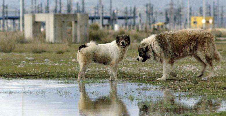 """Selanik Film Festivali """"Ne olursa olsun Sinema"""" diyor…"""